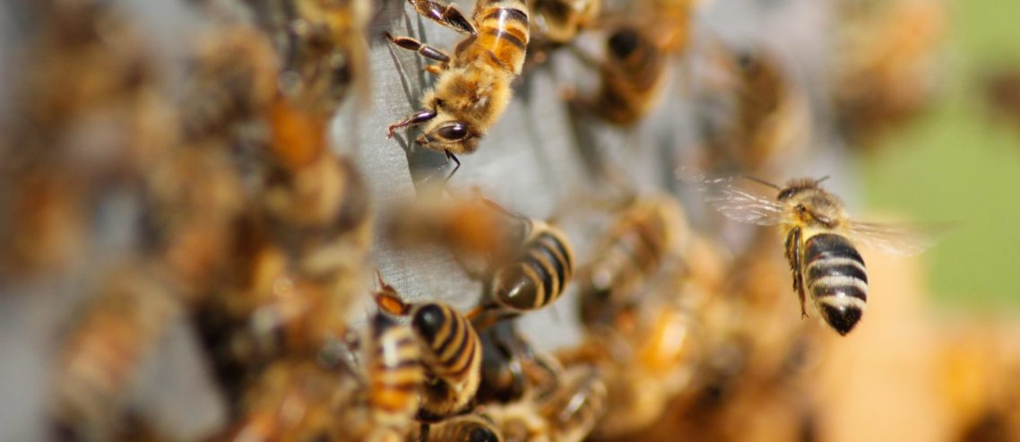 Bees as illustration of REST API and microservices